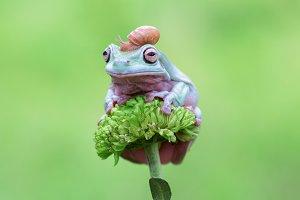 frog, snail, animal,