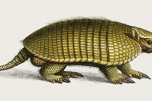 Yellow armadillo illustration (PSD)