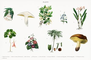 Different types of plants (PSD)