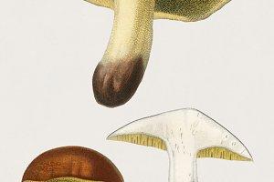 Mushroom hand drawn (PSD)
