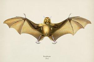 Bat (Roufsette)