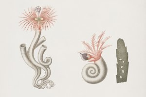 Different types of marine life (PSD)