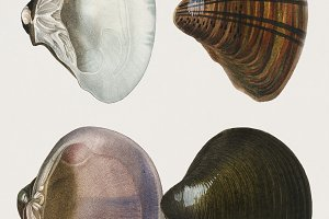 Illustration of mollusks (PSD)