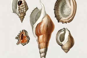 Different types of mollusks (PSD)
