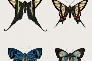 Hand drawn butterflies (PSD)