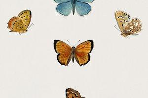 Hand drawn butterflies (PSD)
