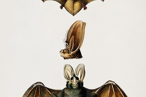 Illustration of bats (PSD)