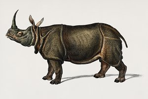 Illustration of rhinoceros (PSD)