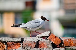 the Seagull is on a brick wall