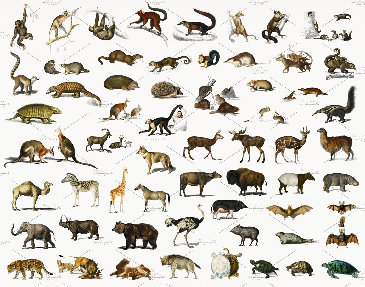 Different types of animals (PSD) | High-Quality Stock Photos ~ Creative  Market