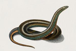 Slug Eater (PSD)