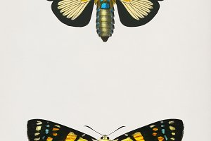 Illustration of butterflies (PSD)