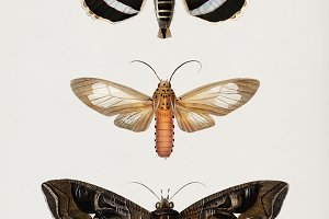 Illustration of moths (PSD)