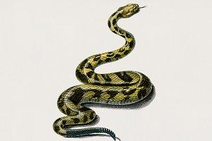 Rattlesnake (Crotale) (PSD)