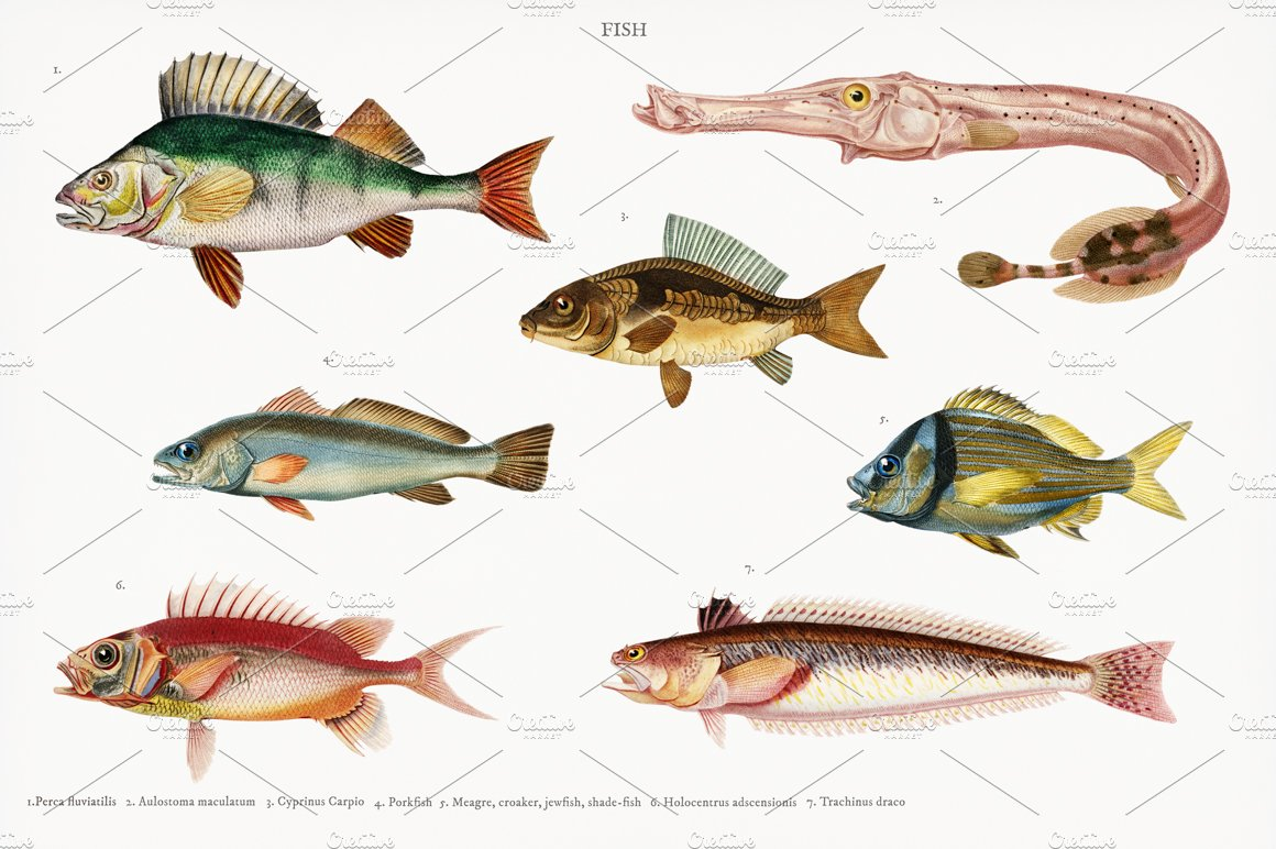 Different types of fishes (PSD) | High-Quality Stock Photos ~ Creative  Market