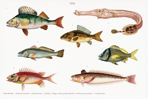 Different types of fishes (PSD)