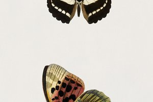 Collection of butterflies (PSD)