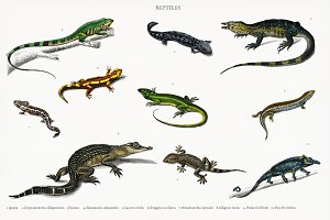 Different types of reptiles (PSD)
