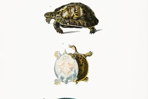 Different types of turtles (PSD)