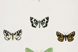 Different types of moths (PSD)