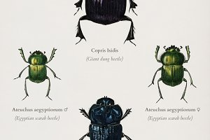 Different types of beetles (PSD)