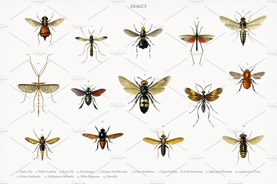 Different types of insects (PSD) | High-Quality Stock Photos ~ Creative  Market