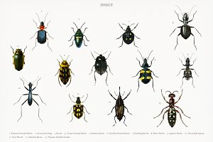 Different types of insects (PSD)