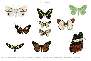 Different types of butterfly(PSD)