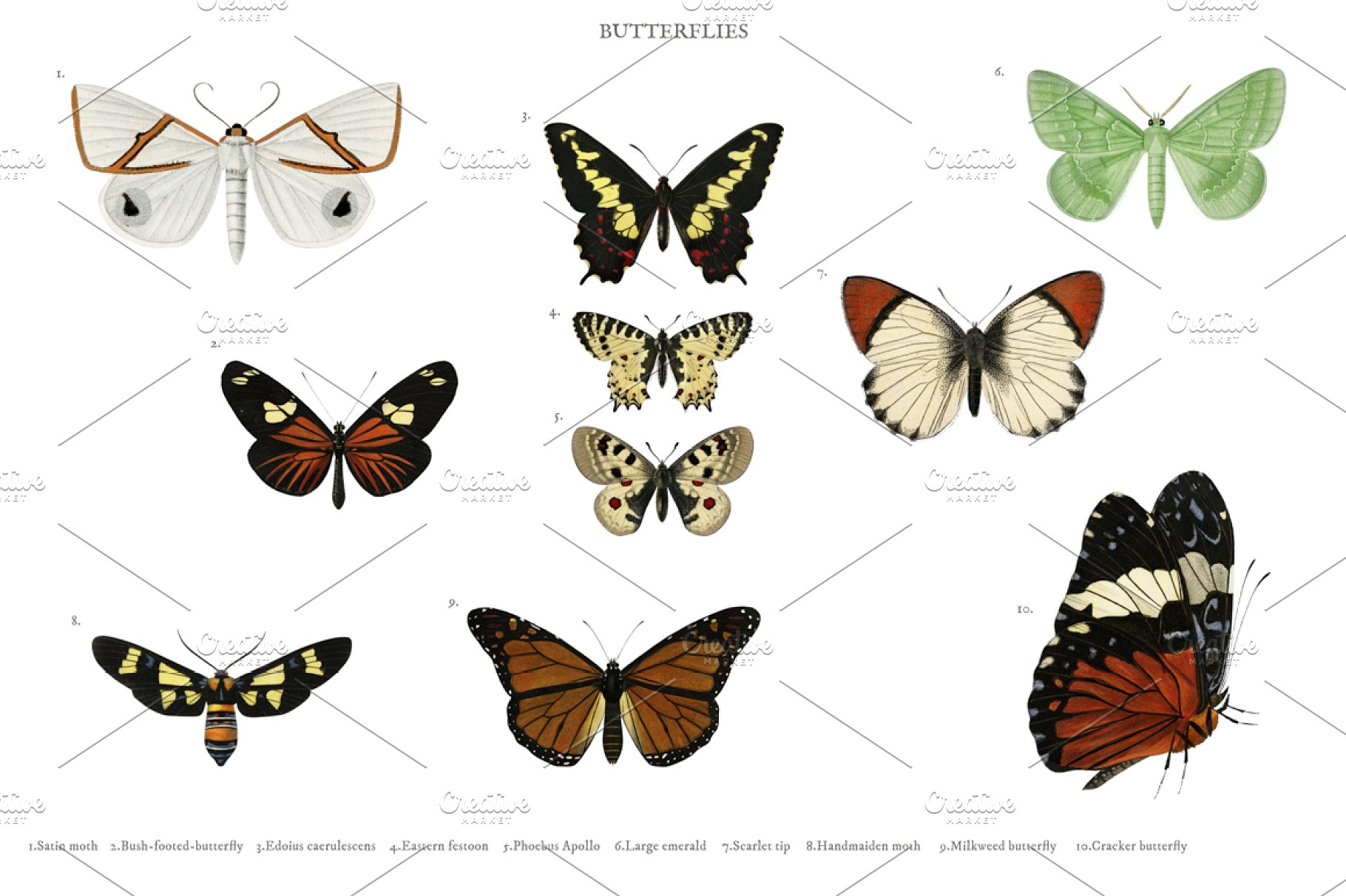 Different types of butterfly(PSD) ~ Photos ~ Creative Market