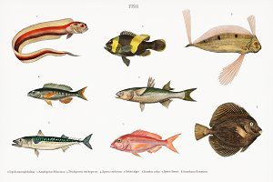 Different types of fish (PSD)