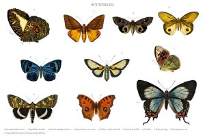 Different types of butterflies (PSD)
