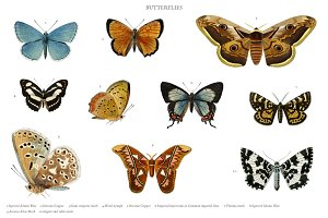 Different types of butterflies