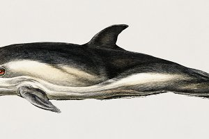 Illustration of dolphin (PSD)