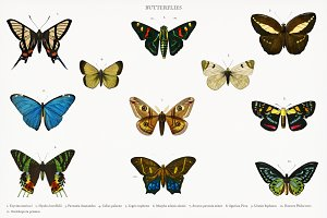 Different types of butterflies (PSD)