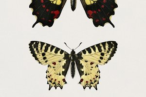Different types of butterfly (PSD)