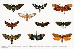 Different types of butterflies(PSD)