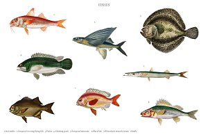 Different types of fishes