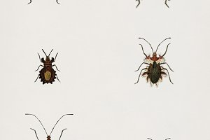 Different types of bugs (PSD)
