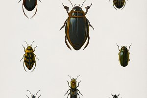 Illustration of insects (PSD)