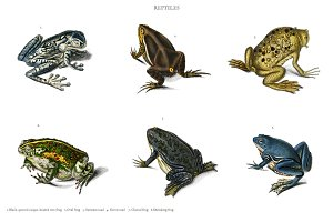 Different types of frogs (PSD