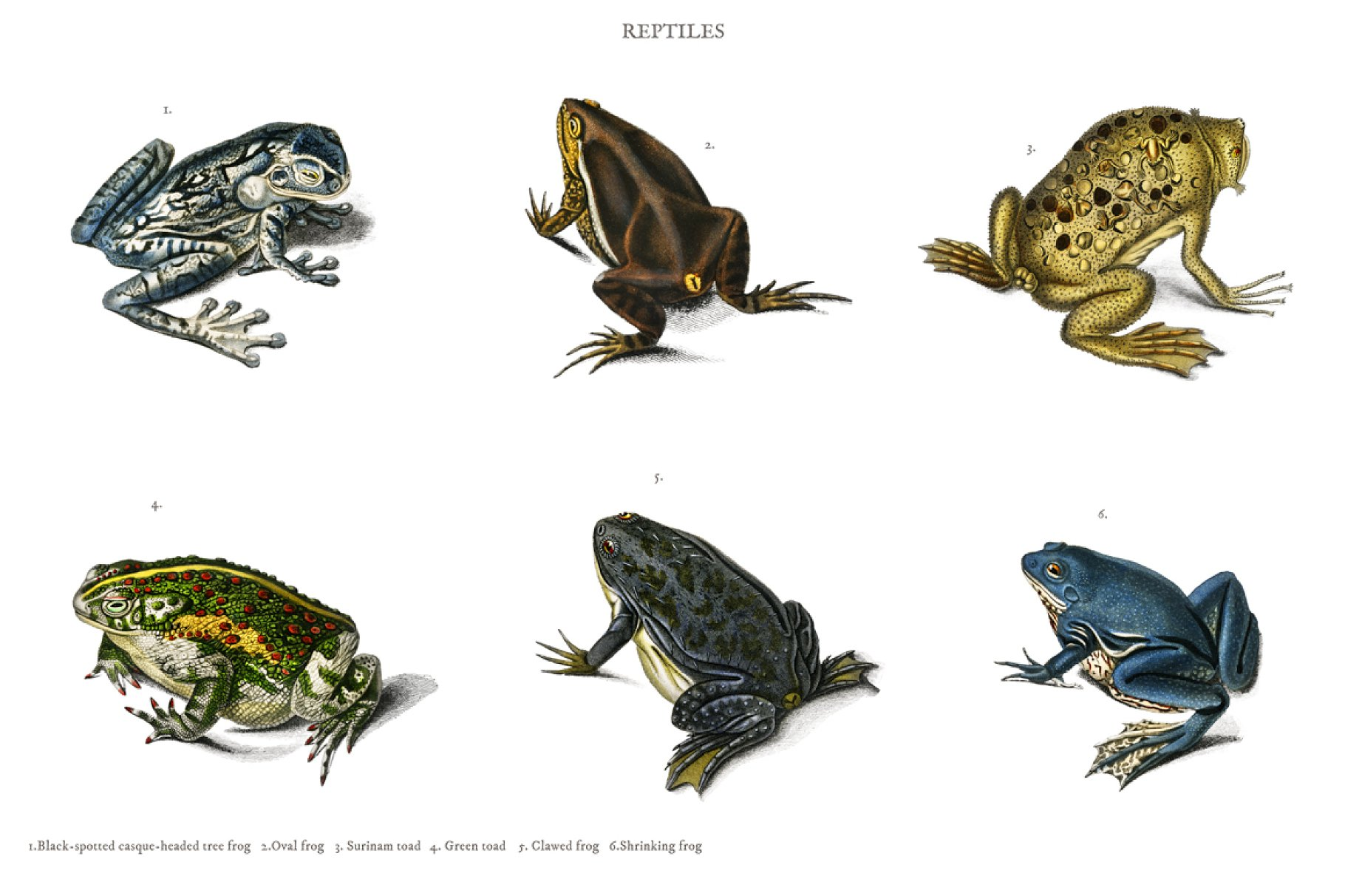 Different types of frogs (PSD ~ Animal Photos ~ Creative Market