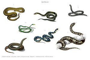 Different types of snakes (PSD)