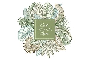 Background with different exotic tropical leaves and jungle palms. Hand drawn vector illustrations
