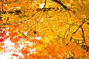Autumn season colorful of tree and l
