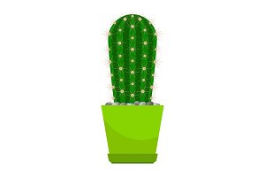 Cactus house plant in pot