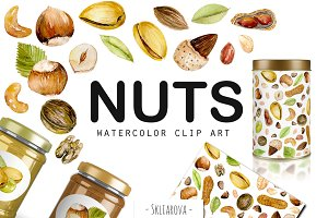 Nuts. Watercolor clip art.