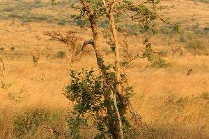African savanna landscape, Vertical
