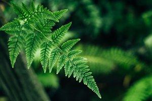 green tropical leaf fern