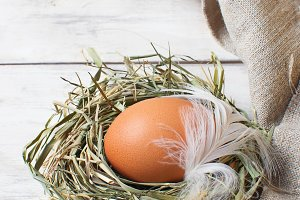 Brown egg in a nest