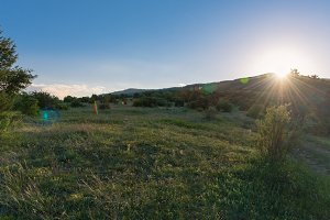 Sunny dawn landscape in a field